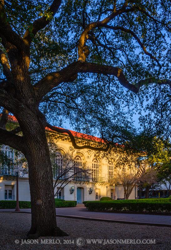 Austin, University of Texas, campus, Battle Hall, live oak, tree, Quercus virginiana, photo
