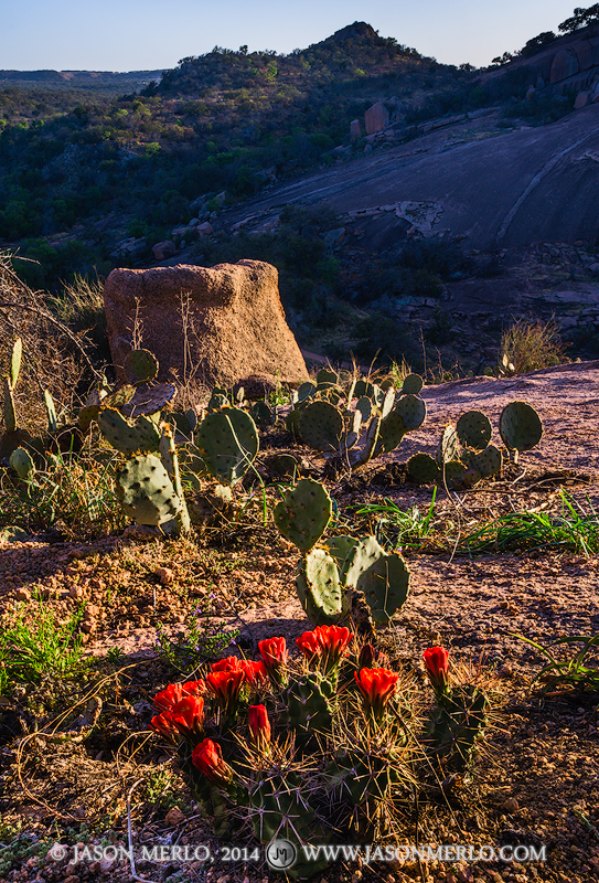 Enchanted Rock State Natural Area, state park, Texas Hill Country, Llano, Fredericksburg, Llano County, Gillespie County, Llano Uplift, claret cup cactus, Echinocereus triglochidiatus, wildflowers, photo