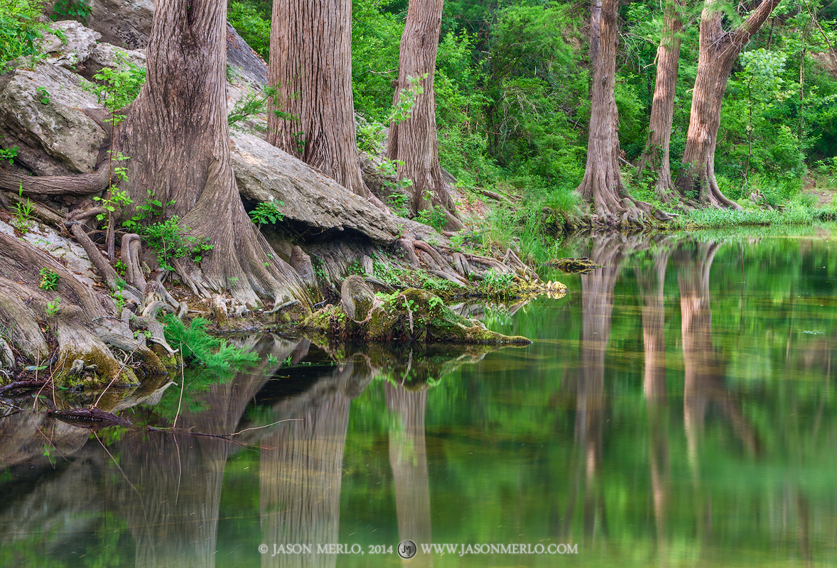 Cypress trees reflected in Onion Creek at McKinney Falls State Park in Austin in the Texas Hill Country.