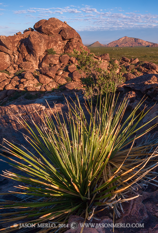 Hueco Tanks State Park and Historic Site, El Paso County, West Texas, mountain, sotol, Dasylirion texanum, photo