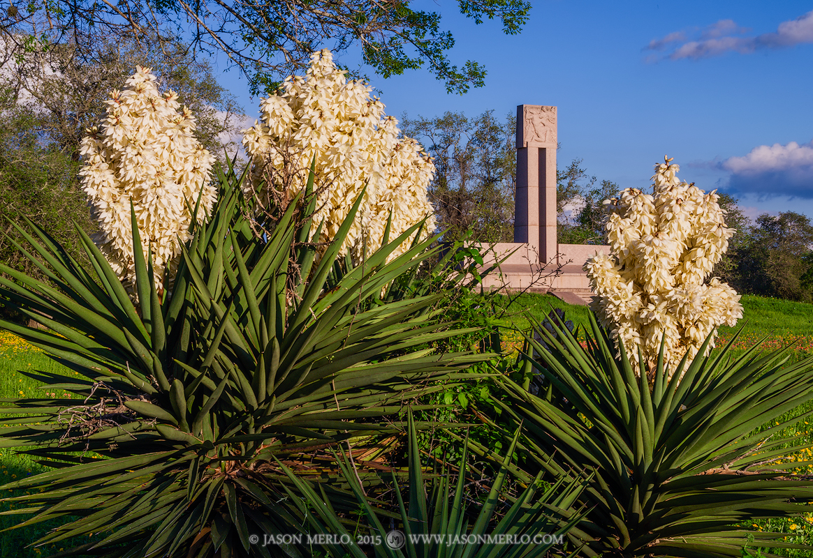 Fannin Memorial Monument, Presidio la Bahía, Goliad, Texas, Texas Revolution, 1836, spanish dagger, bloom , photo