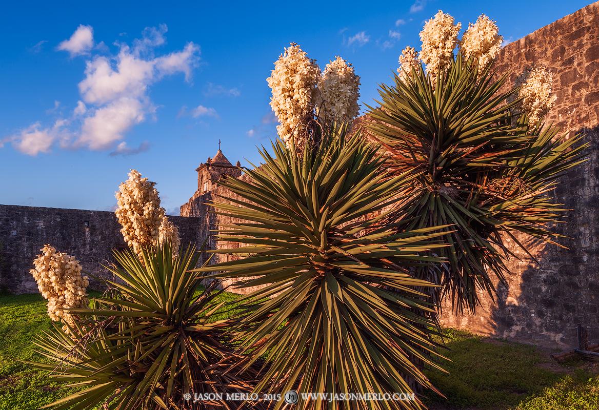 Presidio Nuestra Señora de Loreto de la Bahía, Goliad, South Texas, Presidio la Bahía, spanish dagger, Yucca treculeana, photo