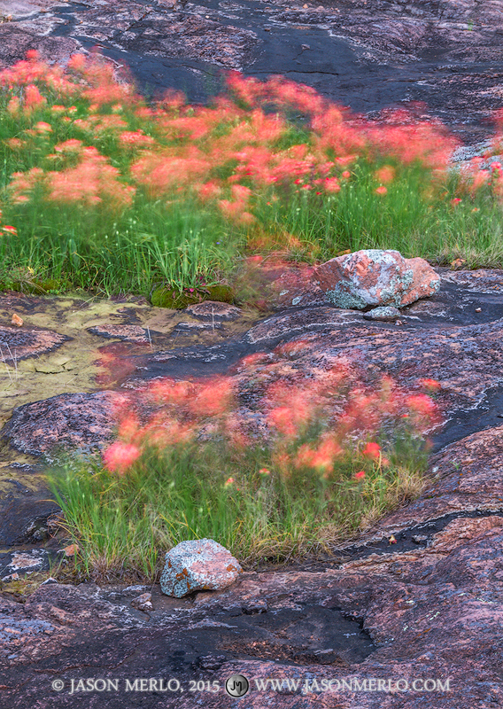 Inks Lake State Park, Texas Hill Country, Burnet County, Llano Uplift, Texas paintbrush, Castilleja indivisa, photo
