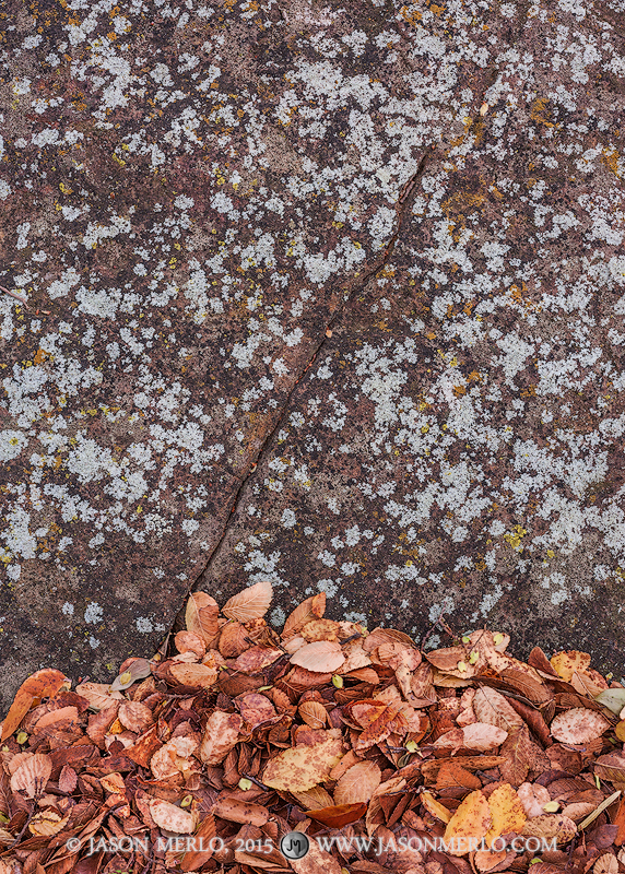 San Saba County, Texas Cross Timbers, Texas Hill Country, cedar elm, leaves, Ulmus crassifolia, sandstone, lichen, photo