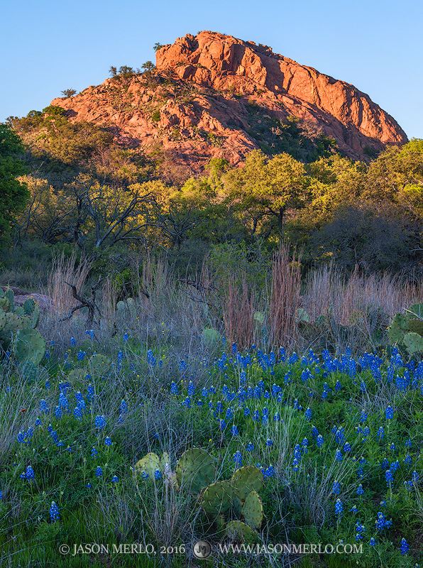 Enchanted Rock State Natural Area, state park, Texas Hill Country, Llano, Fredericksburg, Llano County, Gillespie County, Llano Uplift, Texas bluebonnets, Lupinus texensis, prickly pear, cactus, photo