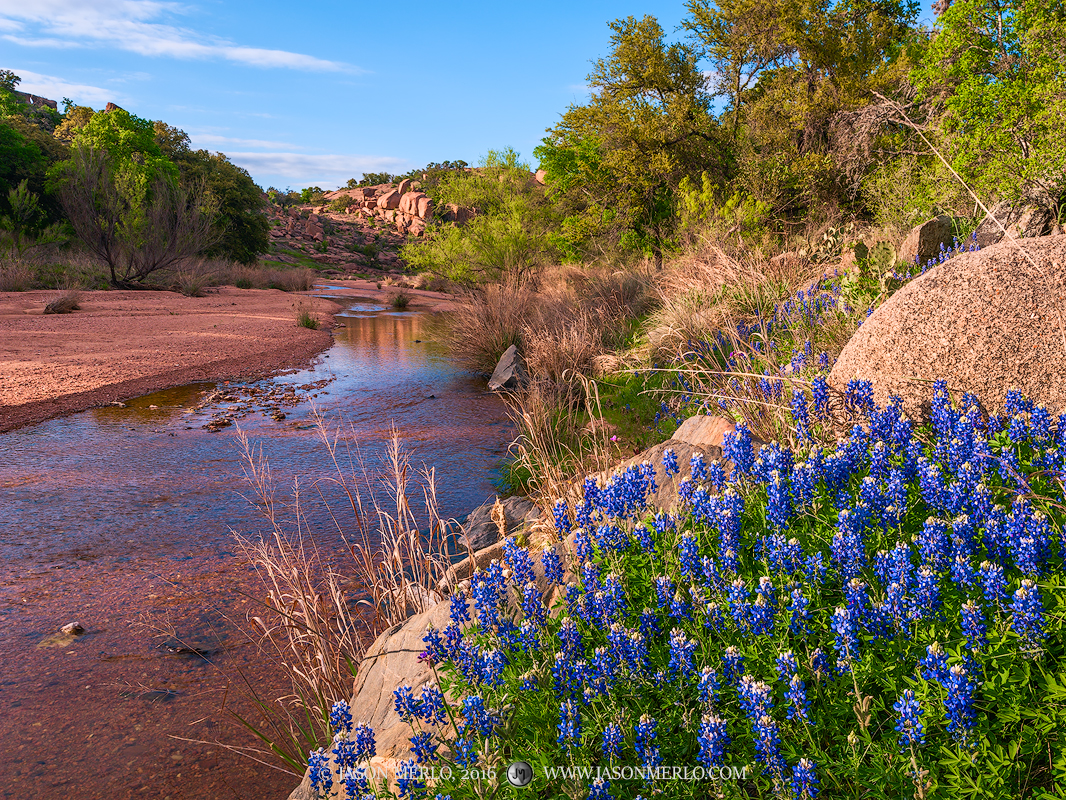 Enchanted Rock State Natural Area, state park, Texas Hill Country, Llano, Fredericksburg, Llano County, Gillespie County, Llano Uplift, bluebonnets, Lupinus texensis, wildflowers, photo