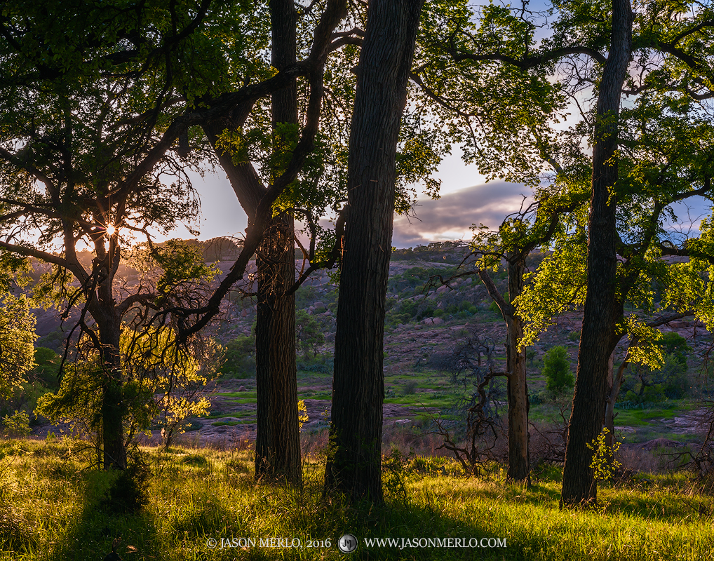 Enchanted Rock State Natural Area, state park, Texas Hill Country, Llano, Fredericksburg, Llano County, Gillespie County, Llano Uplift, cedar elm, trees, Ulmus crassifolia, photo