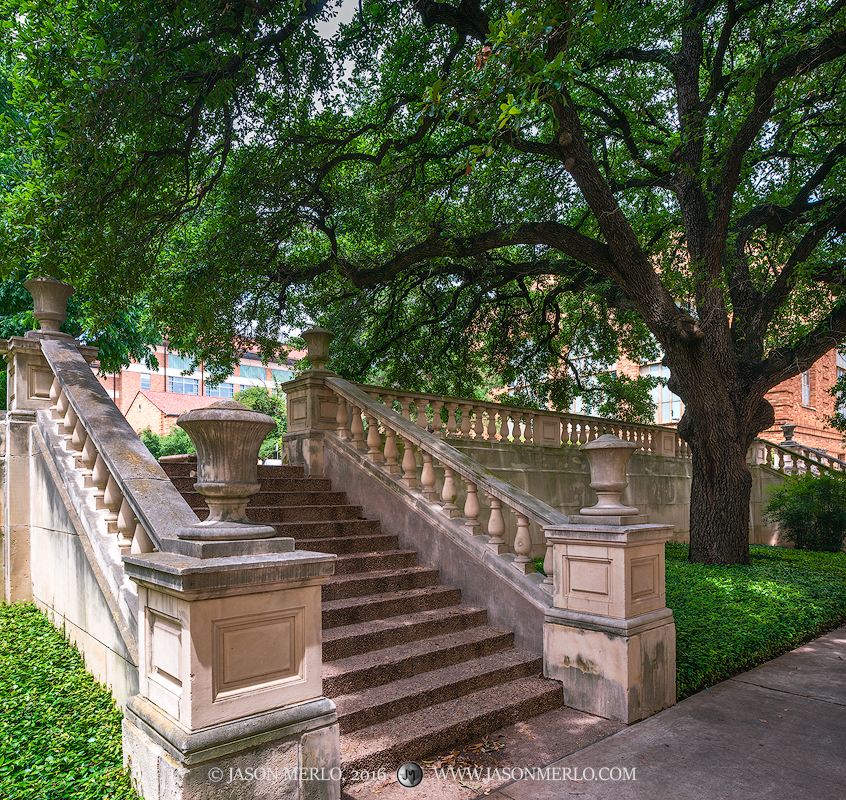 A limestone staircase and live oak tree (Quercus virginiana) at the University of Texas in Austin, Texas.