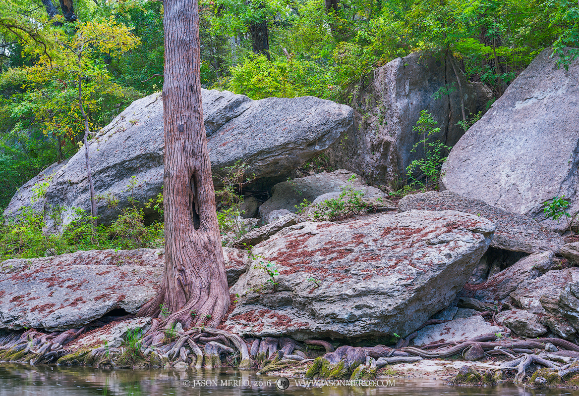 McKinney Falls State Park, Travis County, Austin, Texas Hill Country, Onion Creek, cypress, photo