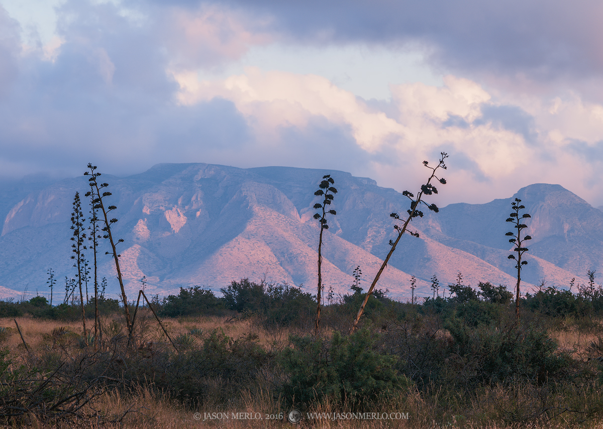 Guadalupe Mountains, West Texas, Culberson County, Chihuahuan Desert, sunrise, agave, Agave havardiana, clouds, photo