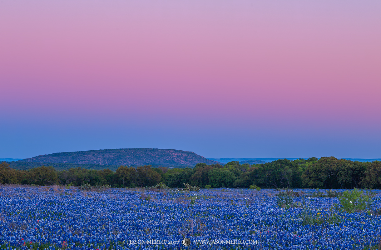 The earth's shadow over a field of Texas bluebonnets (Lupinus texensis) in San Saba Countyin the Texas Hill Country.