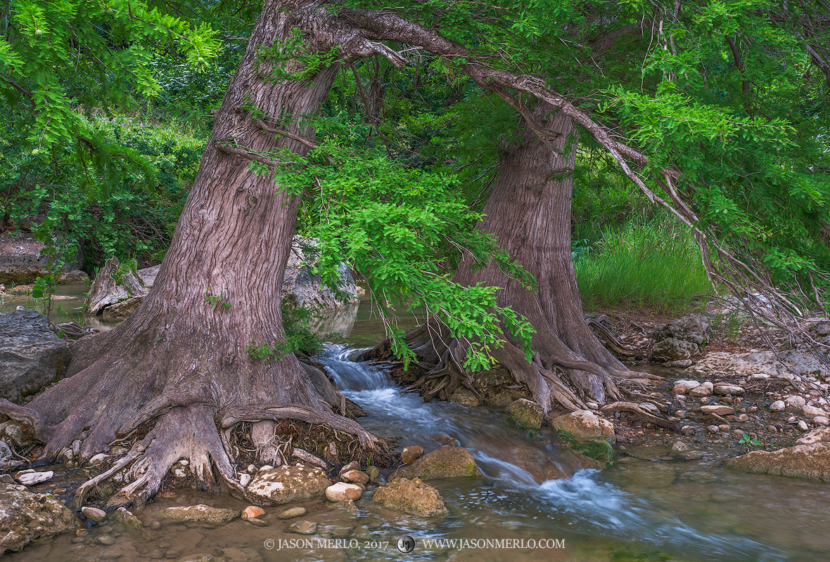 Pedernales Falls State Park, Texas Hill Country, Blanco County, Johnson City, Dripping Springs, Pedernales River, waterfall, cypress, trees,  Taxodium distichum, photo