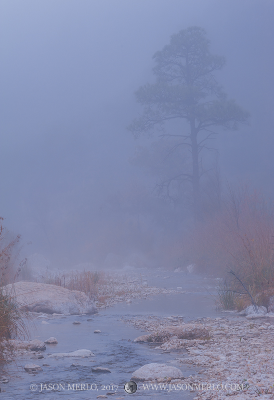 Guadalupe Mountains National Park, West Texas, Culberson County, Chihuahuan Desert, McKittrick Canyon, pine, tree, fog, McKittrick Creek, photo