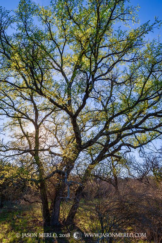 San Saba County, Texas Cross Timbers, Texas Hill Country, photo