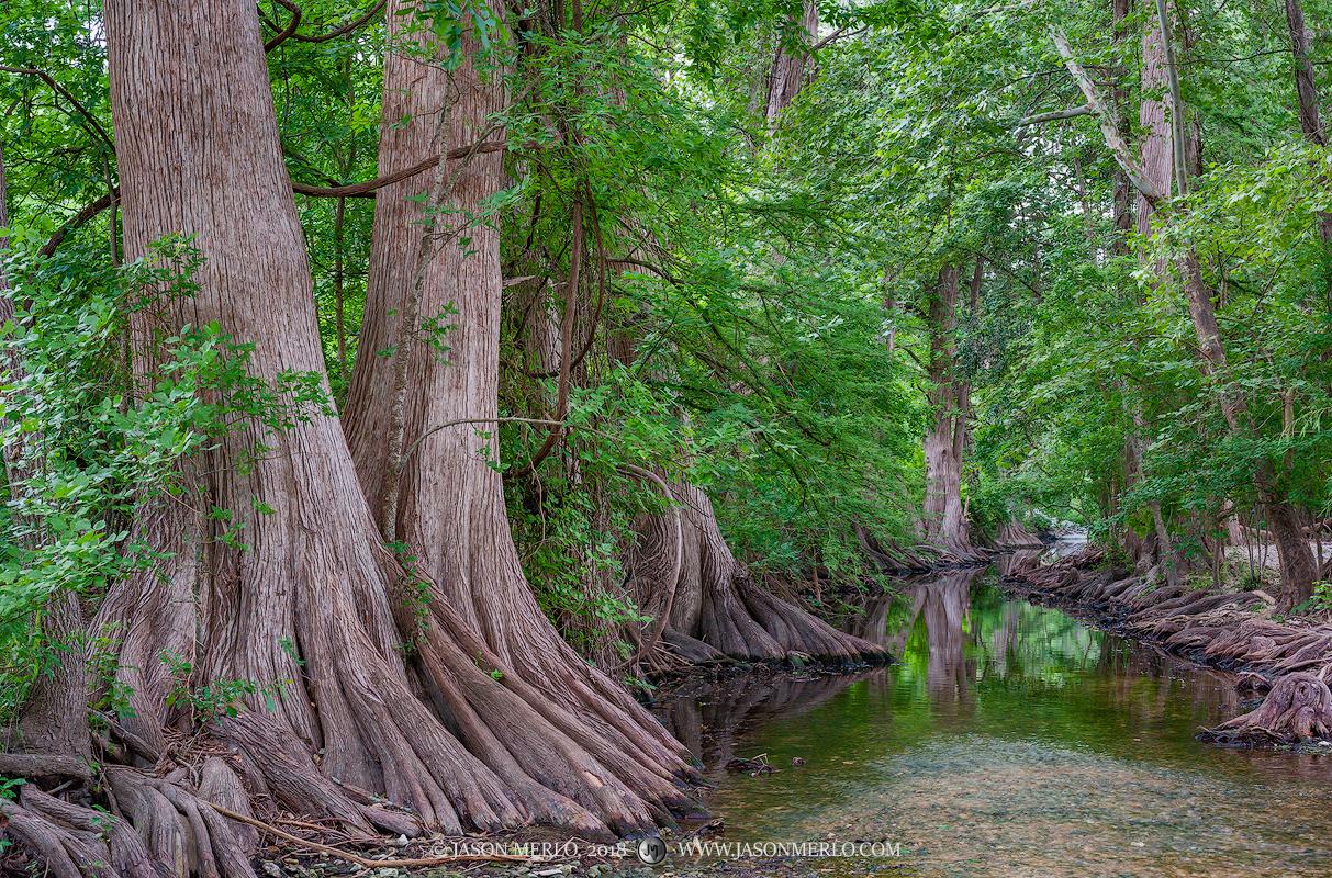 Cibolo Nature Center, Kendall County, Boerne, Texas, Hill Country, Cibolo Creek, cypress, trees, photo