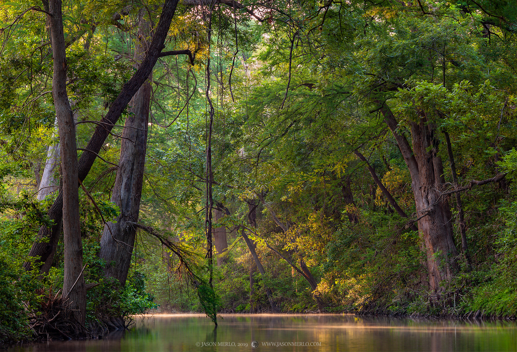 Texas Hill Country, Taxodium distichum, cypress, tree, creek, sunrise, photo