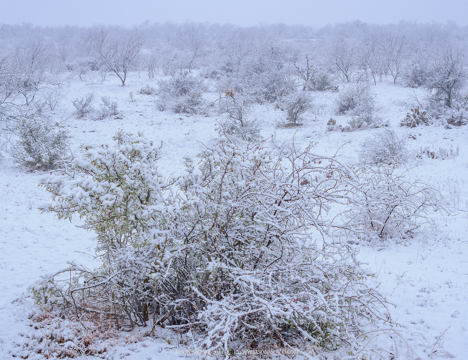 San Saba County; Texas Cross Timbers; winter; snow; blizzard; snowstorm, photo