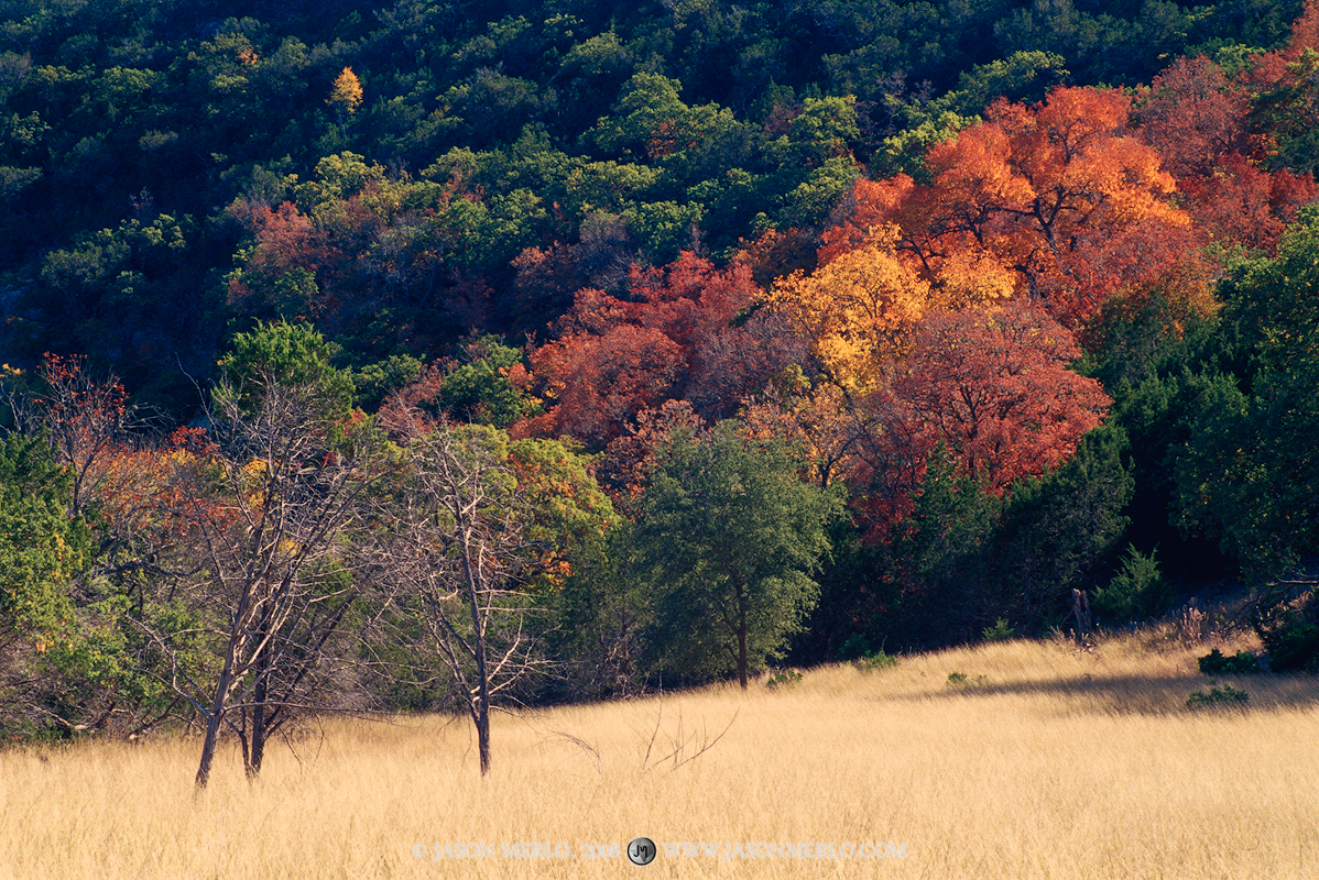 Lost Maples State Natural Area, park, Texas Hill Country, Bandera County, Vanderpool, bigtooth maple, Acer grandidentatum, photo
